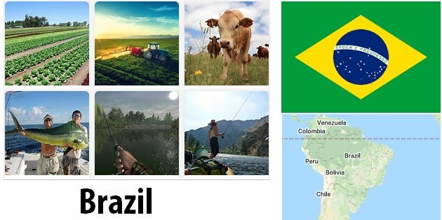 Agriculture and fishing of Brazil