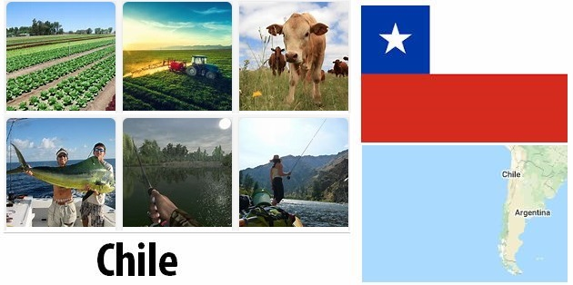 Agriculture and fishing of Chile