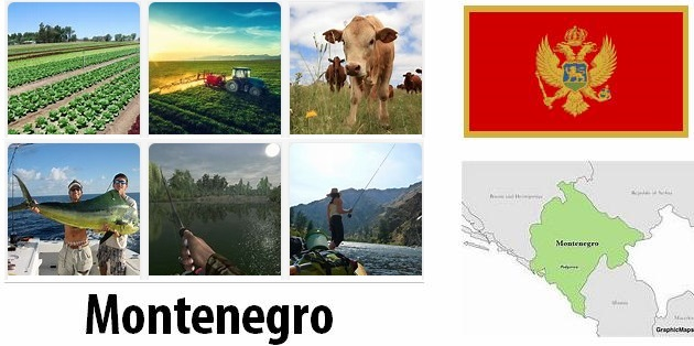 Agriculture and fishing of Montenegro