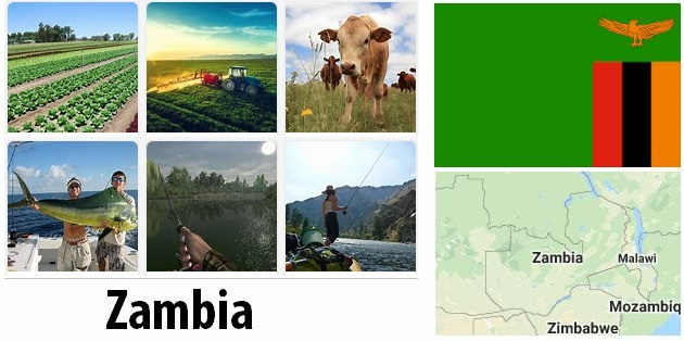 Agriculture and fishing of Zambia