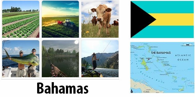 Agriculture and fishing of Bahamas