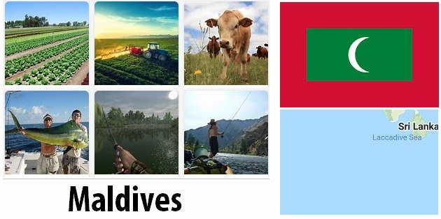 Agriculture and fishing of Maldives