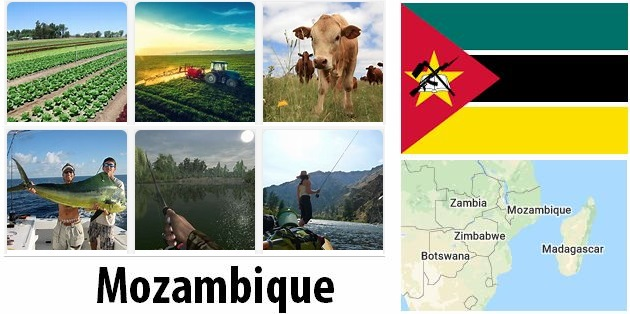 Agriculture and fishing of Mozambique