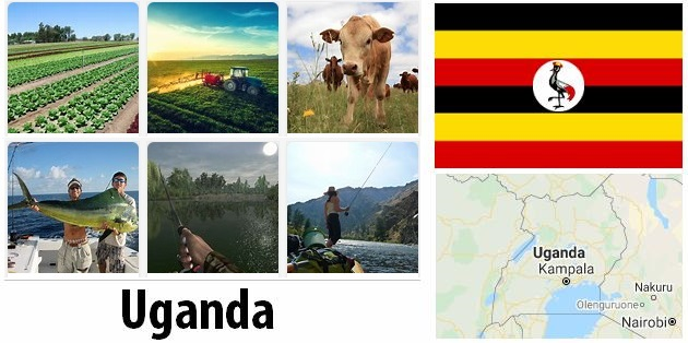 Agriculture and fishing of Uganda